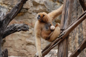Photo courtesy the San Antonio Zoo.
